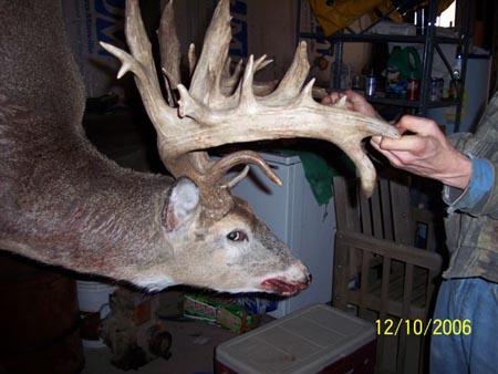 huge buck