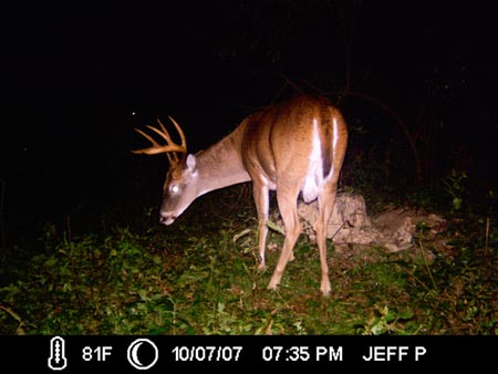 Monster Whitetail Buck