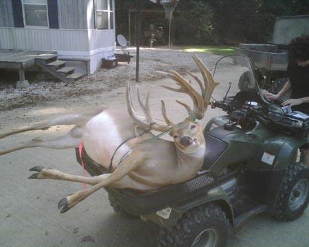 Somerset Whitetail Buck