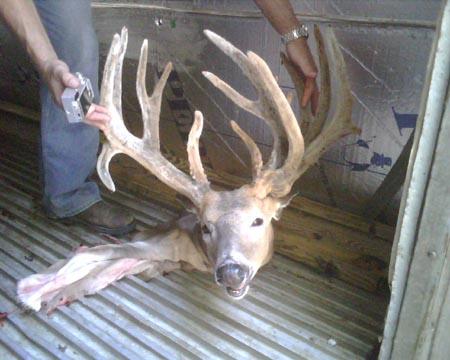 Big Somerset Whitetail Buck