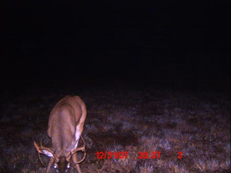 Whitetail Trophy Buck