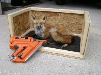 fox mount taxidermy