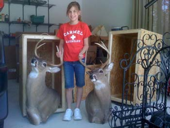 Whitetail buck trophies